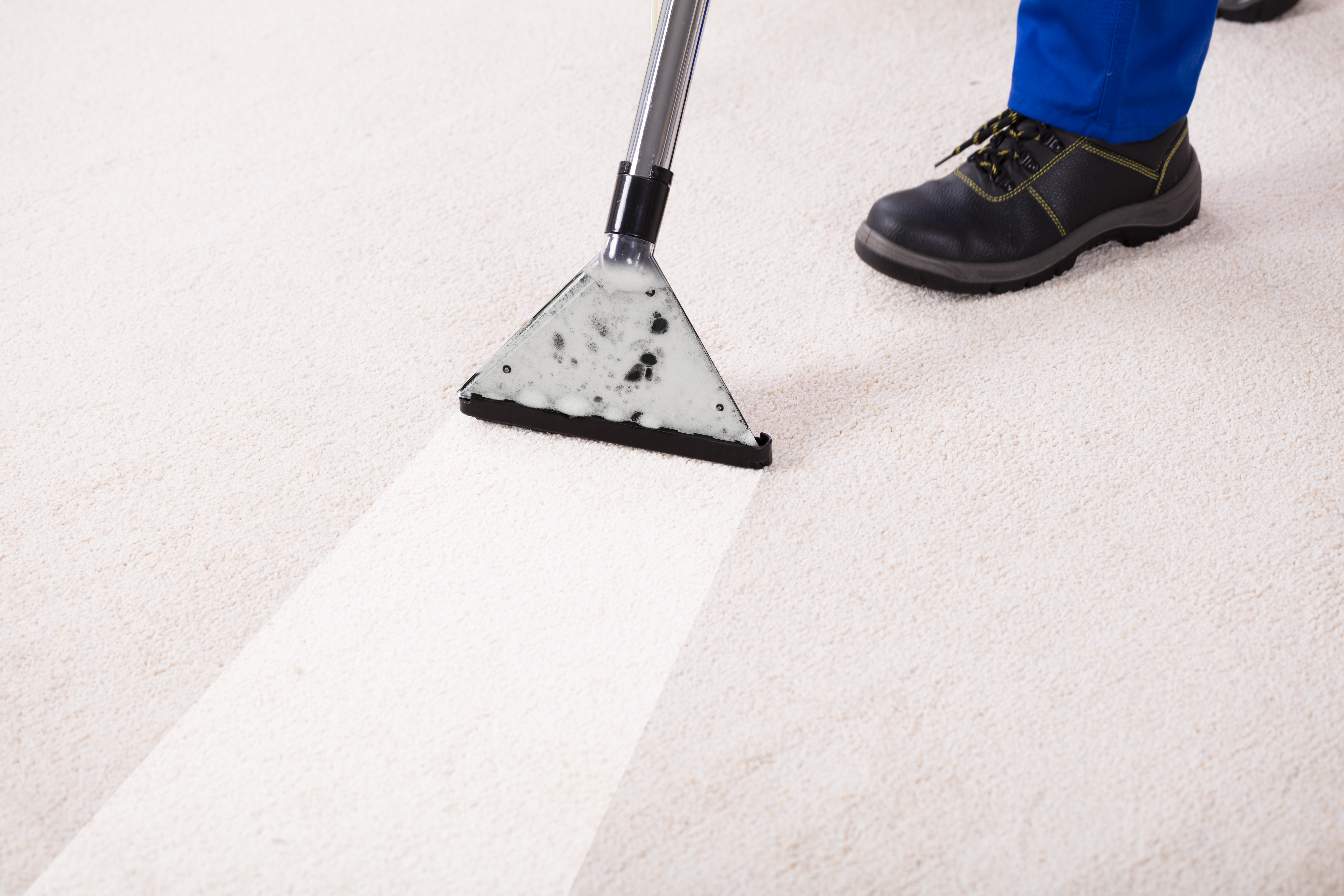 How to Disinfect Carpet in Your Facility